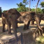 Très beaux éléphants avec une bonne proximité
