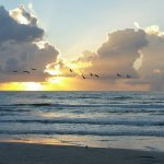 Sunrise with pelicans