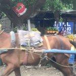 Nicaragua: Horse-drawn cart
