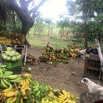 Nicaragua: roadside fruit stand