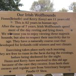 Info about the wolfhounds onsite