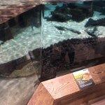 Newport Aquariumの写真