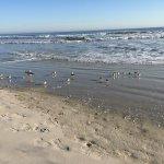 Sea Shells Beach Club