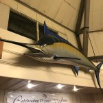 Giant marlin on walls of the Kona Inn