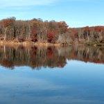 Piney Run Park-billede