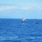Hawaii Ocean Project Foto