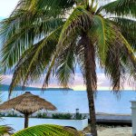Secrets Wild Orchid Palm Tree
