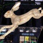 הארנבת