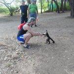 monkeys being friendly close by resort