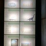 Photo of Museo Civico di Storia Naturale
