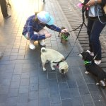 Our daughter loved the street entertainment in Piazza Navona and the many italian dogs!