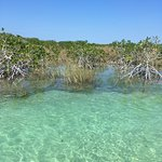 Tour with Pepe: magical mangroves!