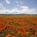 View at Antelope Valley California Poppy Reserve