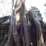 Nas raízes e ruínas de Ta Prohm (2)