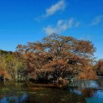 Billede af Landa Park