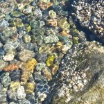 rocks in the water at mini beach at Olympic Sculpture Park