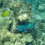 Photo de Agincourt Reef
