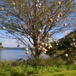 tree of buoys in the grounds...interesting!