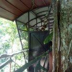 Eingang zum Baumhaus, sehr toll eingerichtet, sogar eine Aussendusche ist vorhanden. Perfekt!