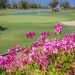 Photo de Golf Las Americas