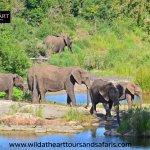 Tur Wisata Alam & Margasatwa