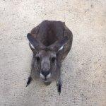 Australia Zoo Photo