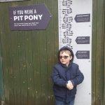 Look 12hh - I'm a Shetland Pony