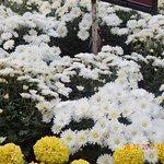Garden in front of Isodayan Bhavan , Mayapur