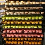 The macarons fresh out from the oven