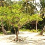 Photo de Anna of Zanzibar
