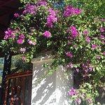 Photo de Jardin Botanico Molino de Inca