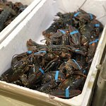 Lobsters for everybody