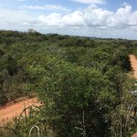 Saragua National Park view from Tower