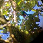 Un quetzal vu grâce à notre excellent guide David Madrigal