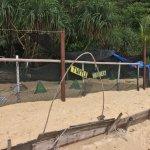 Bubbles Dive Center turtle sanctuary