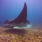 Foto Flores Diving Centre