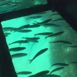 Bicheno's Glass Bottom Boatの写真