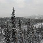 Northern Alaska Tour Company Foto