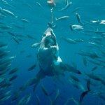 ภาพถ่ายของ Nautilus Liveaboards
