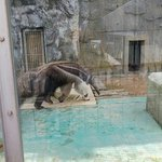 Foto de Okinawa Zoo & Museum