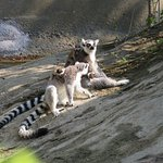 Lemur family was fun to see