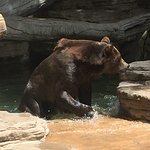 Enjoyed seeing the bears going in and out of the water