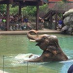 Seeing the elephant in the water was a real treat