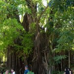 Photo de Old Enchanted Balete Tree