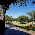 View from dinig area - watering hole with giraffe drinking (somewhat small due to cell phone cam