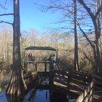 Photo of Six Mile Cypress Slough Preserve