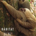 A family of sloths live in the tree canopy above the restaurant.They often come down visiting di