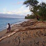 the driftwood-filled beach