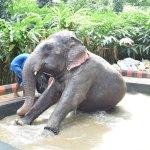 Elephant shower Area