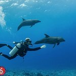 Diver and dolphins